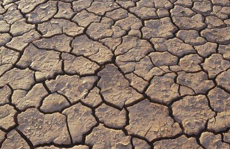 Cracked earth in desert