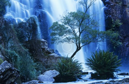 Australia waterfall in forest