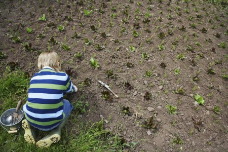 Boy planting sprouts