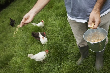 Man feeding hens in garden
