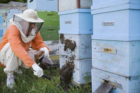 Beekeeper Tending Beehives