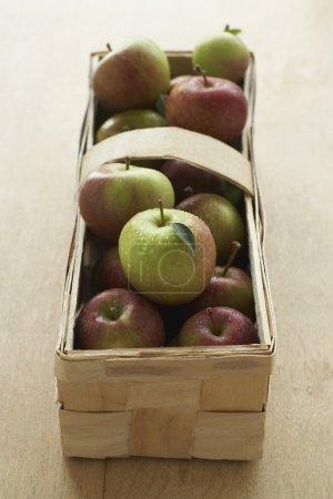 fresh picked Apples in basket