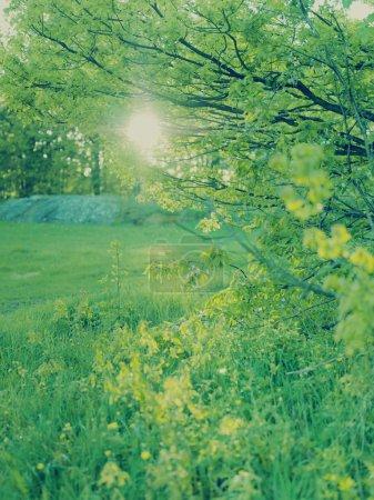 Photo pour Soleil brillant creux frais printemps vert - image libre de droit