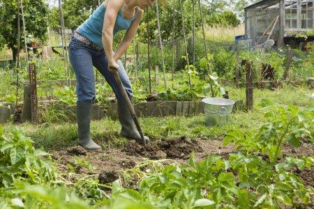 Adult Woman gardening