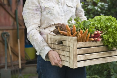 Man carrying crate of vegetables