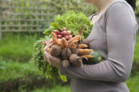 Photo for Woman holding vegetables in garden, mid section, side view - Royalty Free Image