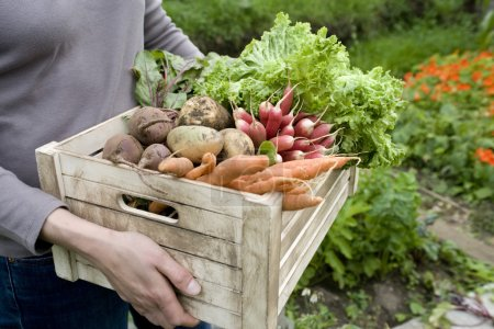 Woman carrying crate of vegetables