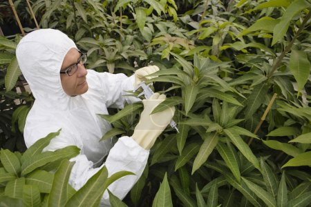 Male scientist working with plants