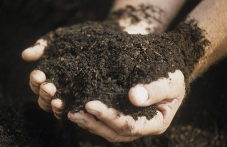 Male hands holding soil