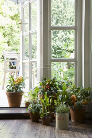 Photo for Small potted plants  in house - Royalty Free Image