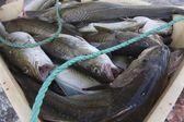 captures de poissons de Norvège
