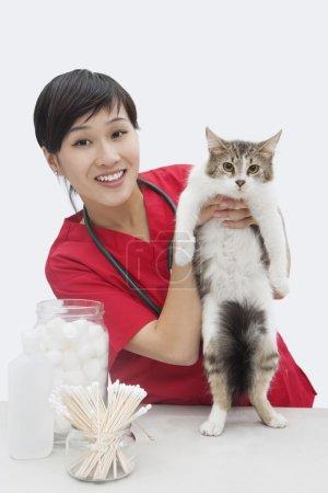 Foto de Retrato de una veterinaria asiática sosteniendo gato sobre fondo gris - Imagen libre de derechos