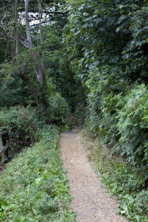 chemin de campagne dans la campagne anglaise