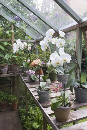 Orchid flowers on greenhouse workbench