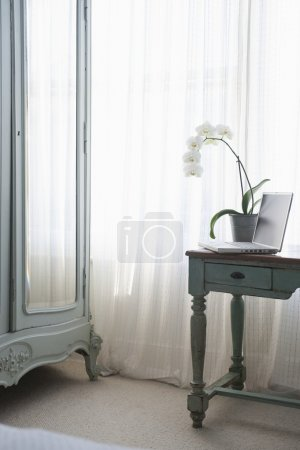 Orchid and laptop
