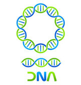 DNA Strand and Seamless