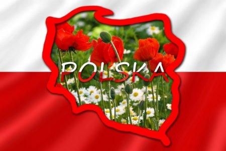 Photo pour Une carte stylisée de la Pologne sur le drapeau rouge et blanc rempli de typiques pour cette fleurs de pays dans la Prairie - image libre de droit