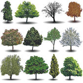 A collection of different photo realistic vector trees