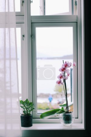 Flowers on the windowsill