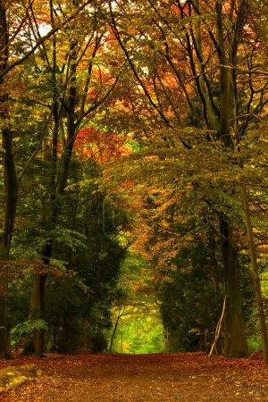 Photo pour Belle piste au milieu d'une forêt pendant la saison d'automne - image libre de droit
