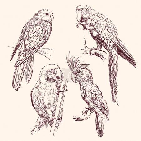 Illustration for Parrot set isolated hand drawn vector llustration - Royalty Free Image
