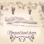 Hand drawn label vineyards vector illustration iso...