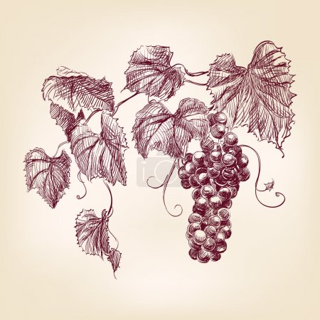 Illustration pour Bouquet de raisins dessiné à la main illustration vectorielle vintage - image libre de droit