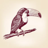 Toucan hand drawn