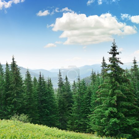 Photo pour Beautiful pine trees on background high mountains. - image libre de droit