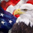 Bald eagle with the american flag out of focus and...