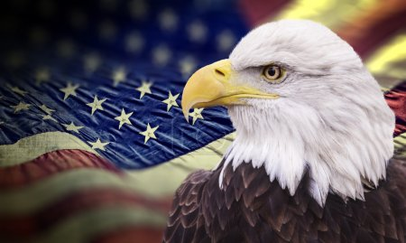 Bald eagle with grungy looking american flag