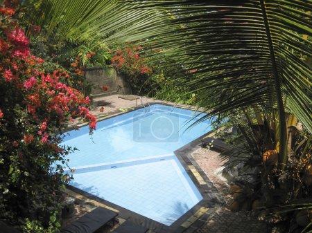 Photo pour Jardins tropicaux luxuriants autour de la petite piscine en résot ubud bali indonesia - image libre de droit
