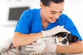 vet comforting sick dog
