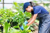 female nursery worker working in greenhouse