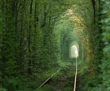 Photo pour Tunnel naturel de l'amour, formée d'arbres en ukraine, klevan. - image libre de droit