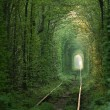 Natural tunnel of love formed by trees in Ukraine,...