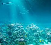 Sea or ocean underwater coral reef with shark