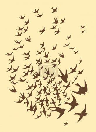 Silhouette of flock birds
