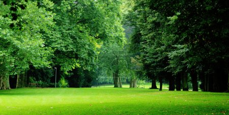 Green trees in city-park
