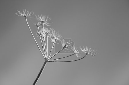 Photo for Black and white abstract flower background - Royalty Free Image