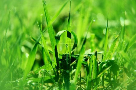 Foto de Fondo mañana natural con hierba verde - Imagen libre de derechos