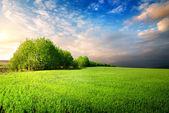 Cloudy sky in grassland