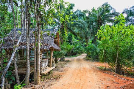 hut on the road in the jungle on the Phuket in Thailand
