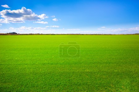 Photo for Background image of lush grass field under blue sky - Royalty Free Image