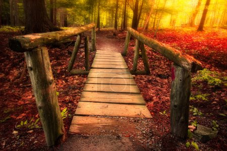 Photo for Footbridge path through woods in magical light - Royalty Free Image