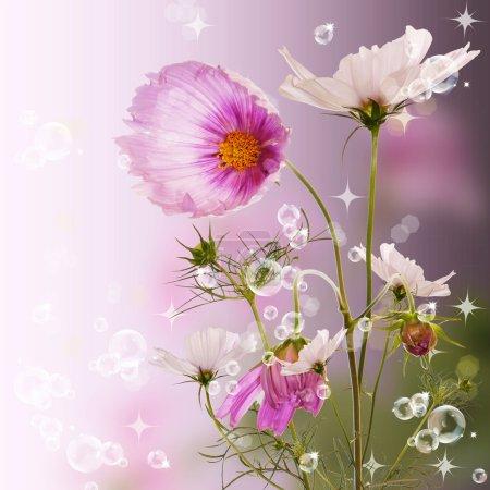 Photo pour Belles fleurs de jardin. Conception de la flore - image libre de droit