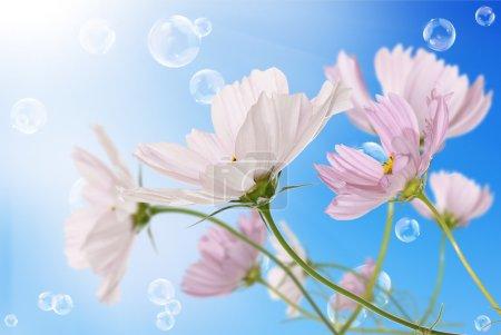 Pink decorative beautiful flowers