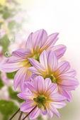 Exotické flowers.summer slunné příroda