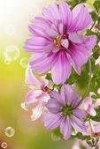 Exotické flowers.flora karta