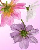 Krásné květiny card.floral pozadí